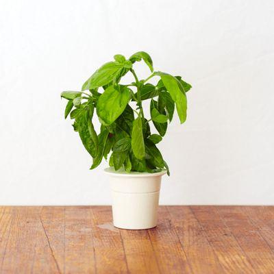 Recharges pour Click & Grow Jardin d'intérieur intelligent