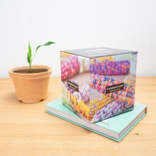 Box de maïs arc-en-ciel à planter