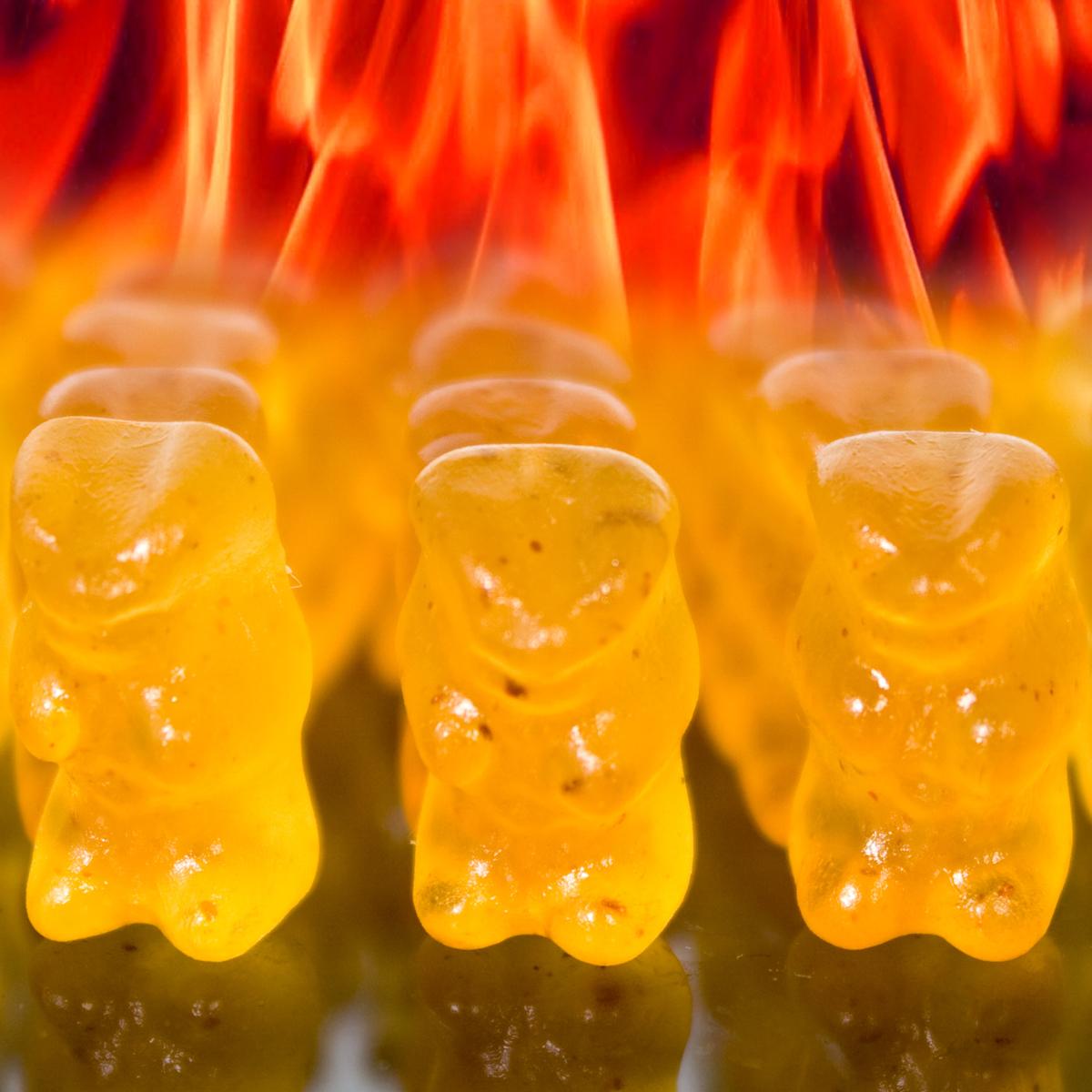Des oursons diablement piquants !