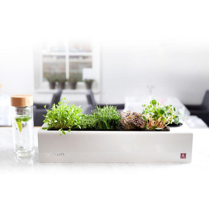 Assortiment de Plantes Aromatiques CressToday