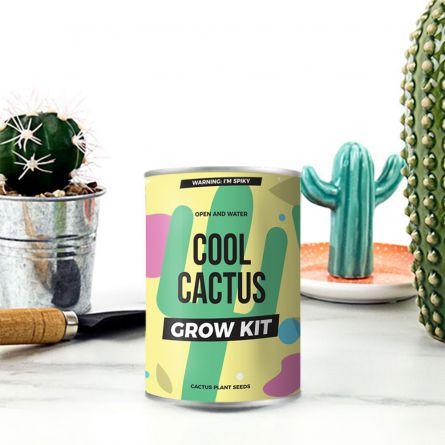 Cactus en Boite