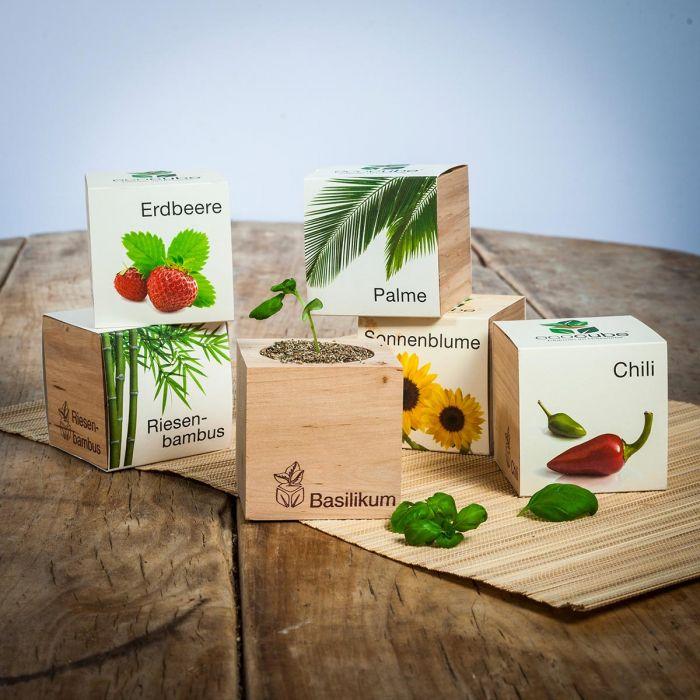 ecocube - plantes dans de cubes en bois