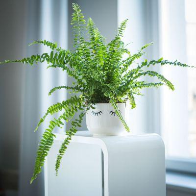 Décoration & Mobilier - Pot de Fleurs Endormi