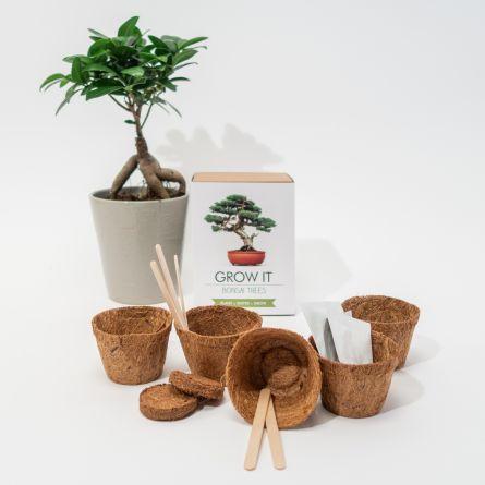 Kit Grow It - Arbre Bonsaï