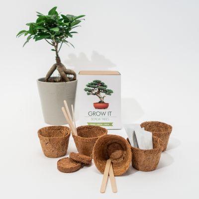 Cadeau crémaillère - Kit Grow It - Arbre Bonsaï